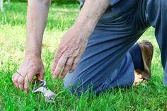 Artroza genunchiului Shiatsu