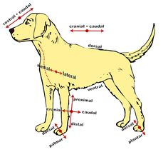 Directions of a dog