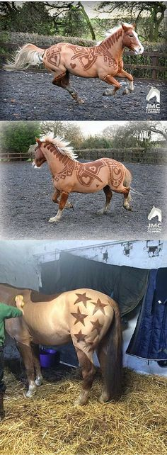 These horses got the coolest haircuts ever.