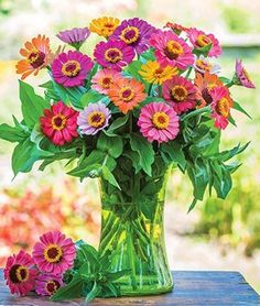 Direct sow flower seeds offer the simplest garden solution. Shop annual flower seeds and plants that can be directly sown into your garden such as Zinnia, Sunflower, and Marigold varieties at Burpee. Summer Flowers, Cut Flowers, Flowers In Hair, Colorful Flowers, Small Flowers, Yellow Flowers, Indoor Flowers, Tropical Flowers, Wedding Flowers