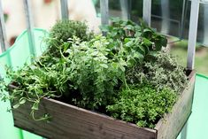 Small windowbox herb garden hanging on a balcony. Photo by Suzette Pauwels.