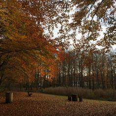 Het bos kleurt prachtig roodbruin