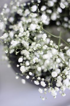 Low baby's breath flowers