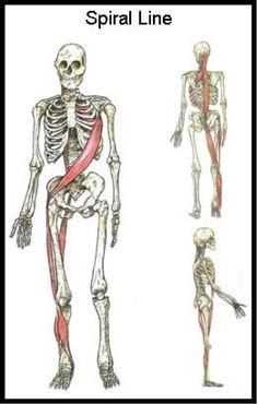 sfma-anatomytrains4