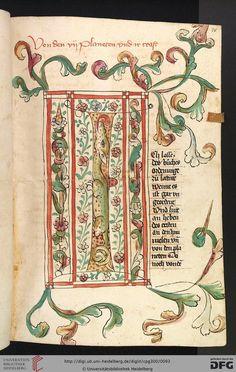 Cod. Pal. germ. 300 Konrad von Megenberg Das Buch der Natur Hagenau - Werkstatt Diebold Lauber, um 1442-1448? Page: 38r I-Initiale aus Blattwerk und einem Drachen