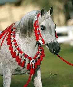 arabian horse bridles for sale - Google Search