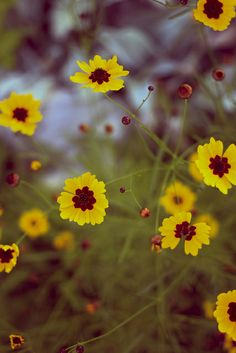 Yellow Wildflowers #HelloColor