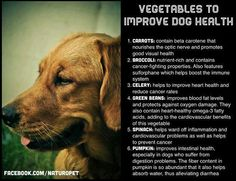 Veggies To Improve Dog Health   Please remember that #dogs need these veggies broken down for them as they don't have the enzymes to do it themselves, so lightly steaming and puréeing veggies will help with nutrient absorption. www.mydynamicdog.com