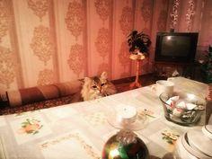 Ho fame, c'e un anima pia che mi da qualcosa ? Foto di gatto in attesa !