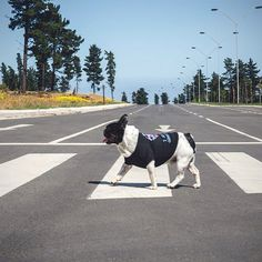 Abbey Road Style!