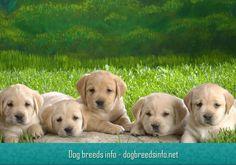 Dog breeds info - http://dogbreedsinfo.net