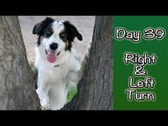 Day 43: Agility Ladder (1st Session) - YouTube