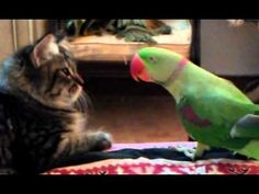 Whoa!! This Parrot Is Speaking 'Meow-Language', Can You Believe It?! | The Meow Post