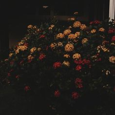 Flowers over shadow  #vsco #vscocam #flowers #over #shadow #color #colors #flower #red #yellow #nature #photography #photograph #light #nikon