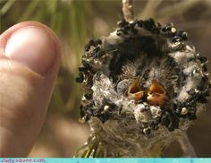 Tiny hummingbirds ~ how incredible and precious is this??