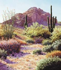 pictures of the arizona desert - Google Search