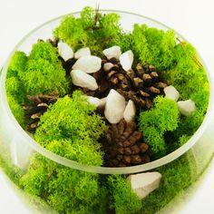 Terrarium, Design, Home Decor, Handmade, Plant, Terrariums, Decoration Home, Hand Made, Room Decor