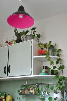 Love this kitchen idea. The corner shelves and the plants. Also, I need that light.