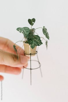 Miniature monstera plant made of paper by Alita Ong for Stocksy United