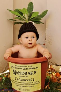 DIY Harry Potter Mandrake Baby Costume from Costume Works.The cutest baby costume ever. For an awesome archive of DIY Halloween Costumes go here. You can find the high resolution version of the mandrake Label created by Crafty Lil' Thing. Baby Harry Potter, Fantasia Harry Potter, Harry Potter Mandrake, Cute Baby Costumes, Babies In Costumes, Mommy Baby Halloween Costumes, Babys 1st Halloween, Toddler Halloween, Toddler Costumes