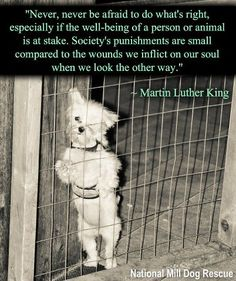 Martin Luther King said OR ANIMAL :)  Ugh I hate to look at this picture but love the quote.