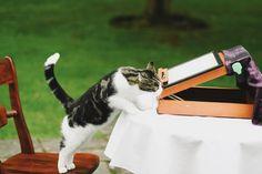 Can I sign the registration with you? Meow  @yhahartingtonhall #cat #wedding #instawedding #instawed #celebrate #vscocam #vsco #weddingideas #creative #happy #animal #cute