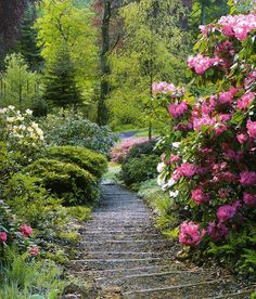 Colby Woodland Garden - Arnroth - Narberth - Pembrokeshire - Wales