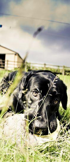 Dog, mans best friend.