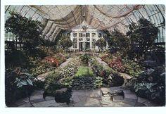 1955 Postcard Interior of Conservatory at Como Park St. Paul Minnesota