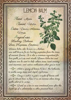 Printable Herbs Book of Shadows Pages Set Herbs & Plants Correspondence, Grimoire Pages, Witchcraft, Wicca, Printable BOS Wicca Herbs, Witchcraft Herbs, Witchcraft Books, Green Witchcraft, Magic Herbs, Herbal Magic, Wiccan Spell Book, Magick Book, Grimoire Book