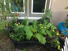 Use a a yard pond liner for a raised bed, punch holes in the liner to help w drainage , you can surround with bricks of rocks to cover the liner Raised Flower Beds, Raised Beds, Koi Pond Liner, Preformed Pond Liner, Growing Bell Peppers, Grilling Gifts, Companion Planting, Bricks, Planters