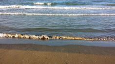 Le ore della sera sulla battigia. the evening hours on the shoreline.#battigia #seashore #camminare #stroll #rimini