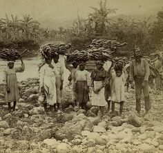 Carrying Bananas To Market, Jamaica, 1900