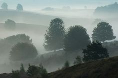 Morning dew at the 'Posbank' at national park 'Hoge Veluwe'