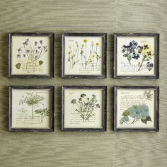 Found it at Joss & Main - Pressed Flowers Framed Print