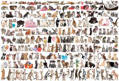 size: Stretched Canvas Print: World of Cats : Entertainment Using advanced technology, we print the image directly onto canvas, stretch it onto support bars, and finish it with hand-painted edges and a protective coating. 2000 Piece Puzzle, Cat Stretching, Dog Poster, Kittens And Puppies, Painting Edges, Stretched Canvas Prints, Original Image, Black Fabric, Framed Artwork