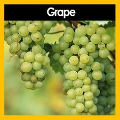 VapeDaddy - Grape, £5.00 (http://www.vapedaddy.co.uk/grape/)