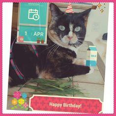 Happyyyyyyy birthday Lili !!! #1erAvril #chat #calico #cat #catfrench #neko #anniversaire