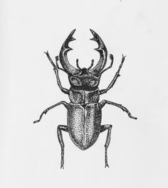 Pointillism or stippling illustration of a stag beetle. Art drawing micron ink on paper. Tattoo idea.