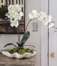 DIY-Orchids in a Clam Shell  | Centerpieces for your Home