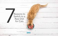 Switch Raw Cat Food Raw Protein, Urinary Tract Infection, Diabetes Mellitus, Weight Control, Happy Animals, Darwin, Raw Food Recipes, Diet, Cats