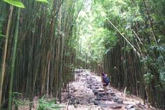 Bamboo Forest adventure Maui