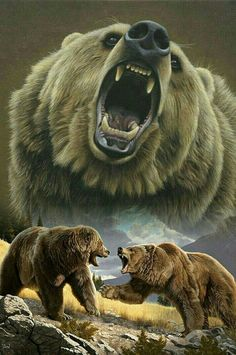 Grizzly Bear Wars!