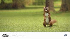 Volkswagen_Bearrel #Photoshop http://www.photoshophobby.com/volkswagen-polo-campaign-small-but-ferocious/