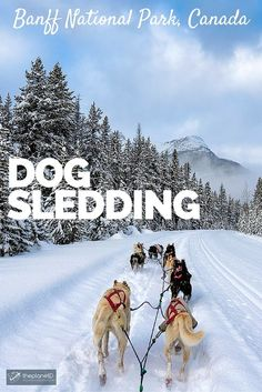 It's the quintessential Canadian adventure, dog sledding in the Rocky Mountains of the Canadian North. If you go to Banff National Park in winter, you must add this to your to do list of winter activities + VIDEO! | The Planet D Adventure Travel Blog
