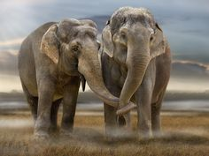 6 Awesome Similarities between Human and Animal Courting - Soulmate.com