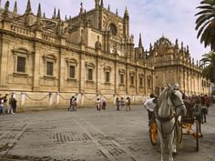 The third largest cathedral in the world is in Sevilla. #Spain #españa #europa #europe #seville #sevilla #architecture #arquitectura #art #travelgram #igdaily #horse #caballo by trand9