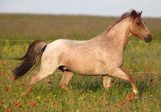 24 chevaux avec les plus belles et uniques couleurs au monde. - Ayoye