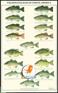 Infografías de peces 2