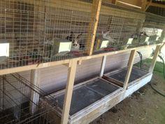 rabbit hutch with worm bins underneath
